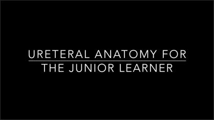 URETERAL ANATOMY FOR THE JUNIOR LEARNER