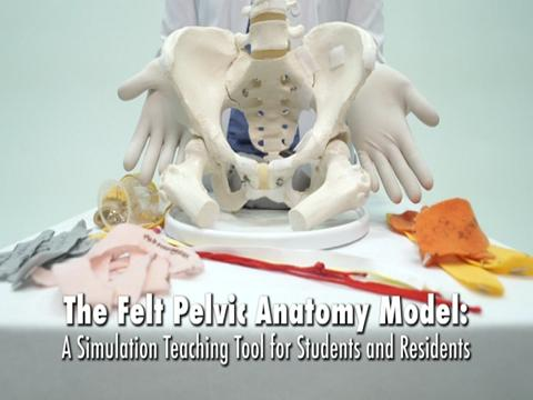 THE FELT PELVIC ANATOMY MODEL: A TEACHING TOOL FOR STUDENTS AND RESIDENTS